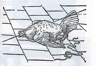 0-blog---Nov 19 kircher chicken080
