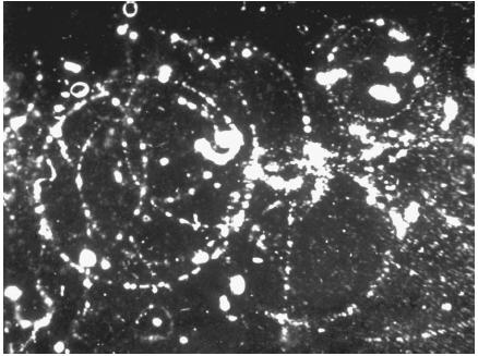 the origin and history of the particle cloud chamber Abstract a photograph obtained in a wilson cloud chamber, operated in a magnetic field, shows the following unusual event: a positive particle, produced in an interaction above the cloud chamber, decays in flight into a positive particle less massive than a k meson.