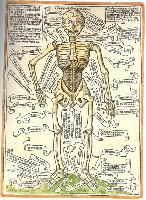 Jf Ptak Science Books A Bit On The History Of The Insides