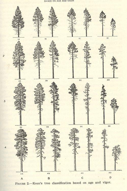Blog--jun 8 tree