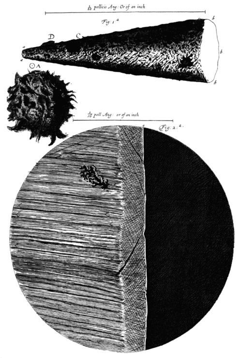 Hooke--needle