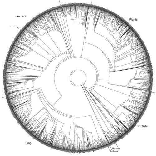 Tree ring of life