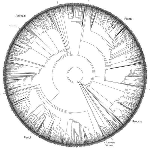 JF Ptak Science Books: Information, Quantitative Display of