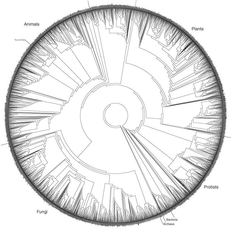 Jf Ptak Science Books Representation Of Quantitative Data Tree Diagrams Trees provide many analogies to human development. jf ptak science books representation