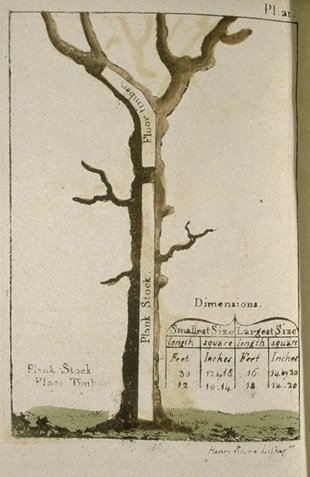 Tree--timber guillet