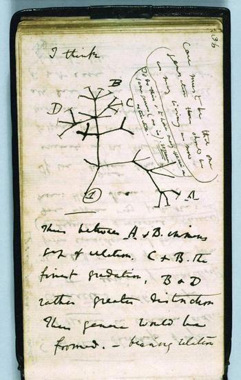 Darwin_first_tree_2