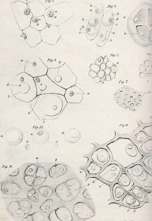 Dots--koch175