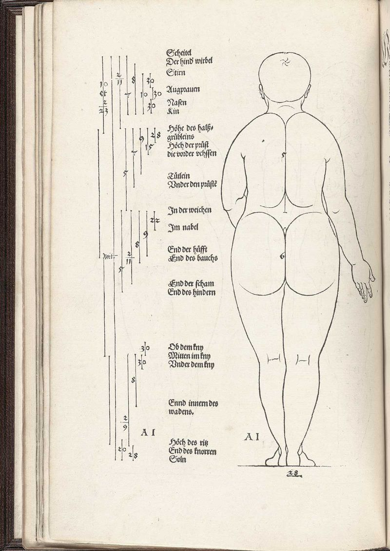 Human map durer rear woman