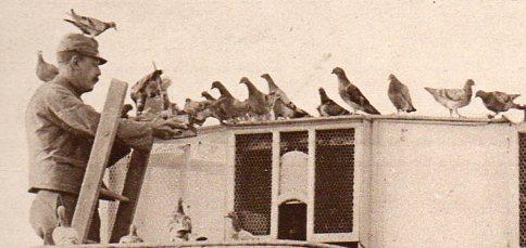 WWI--e---pigeon truck det644