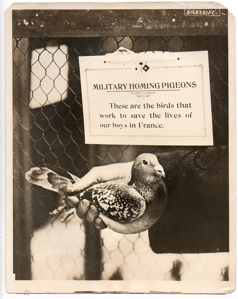 WWI--pigeonb715