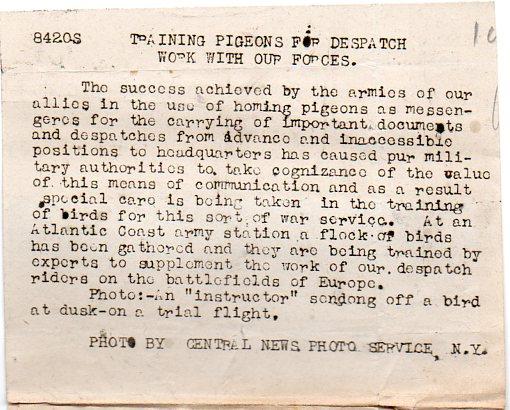 WWI--pigeoncc718