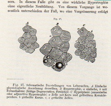Dots--schleiden178