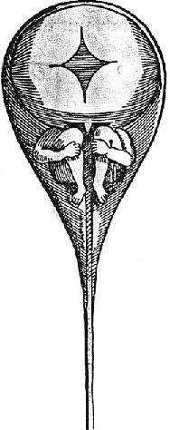 Ovary homunuclus 1