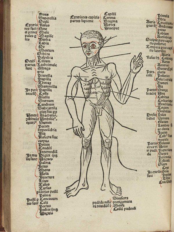 Ungewöhnlich Makroskopische Anatomie Videos Galerie - Anatomie Ideen ...