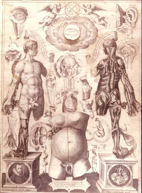 Human map body_1613_remmelin2
