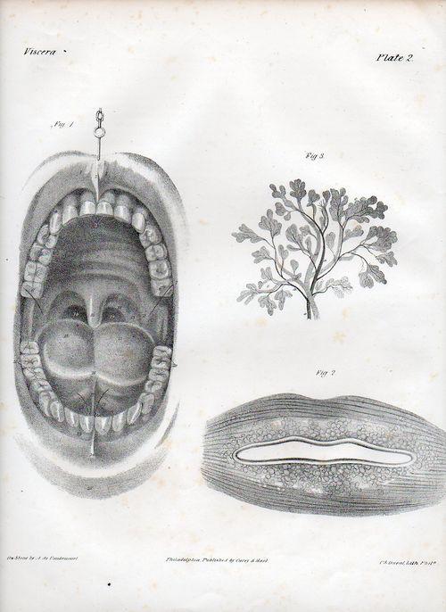 Dadaist senses mouth502