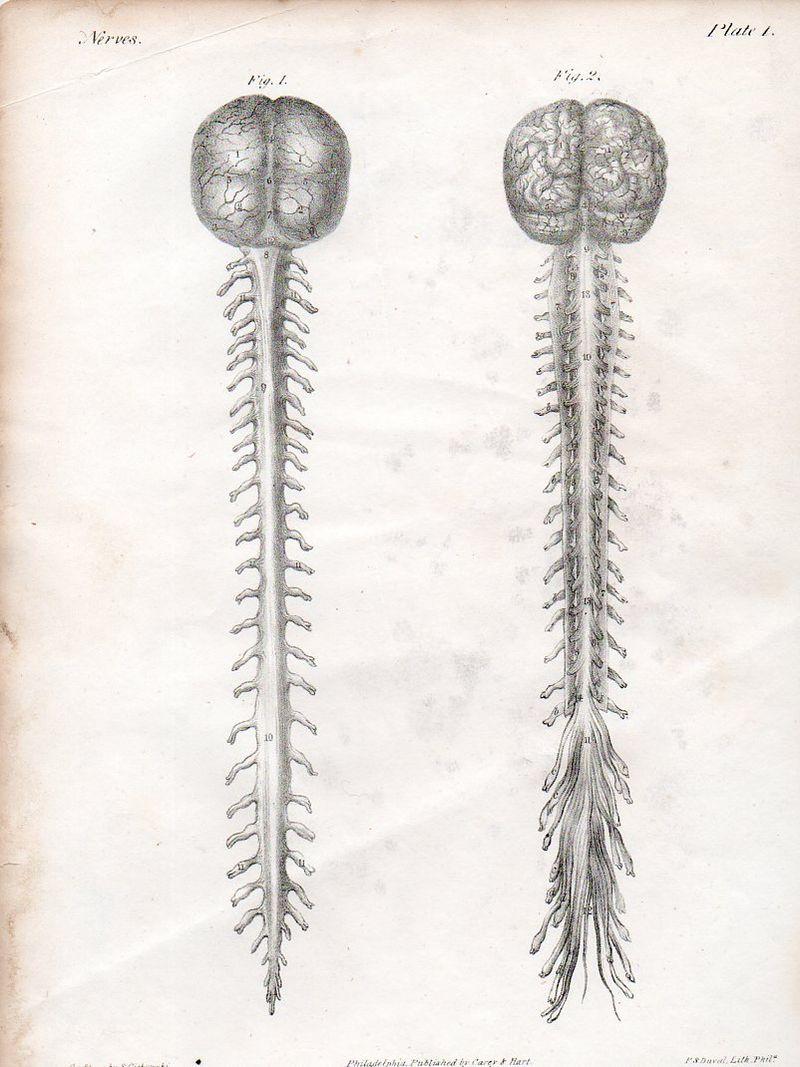 Brain520