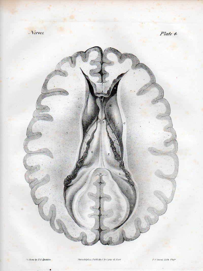 Brain523