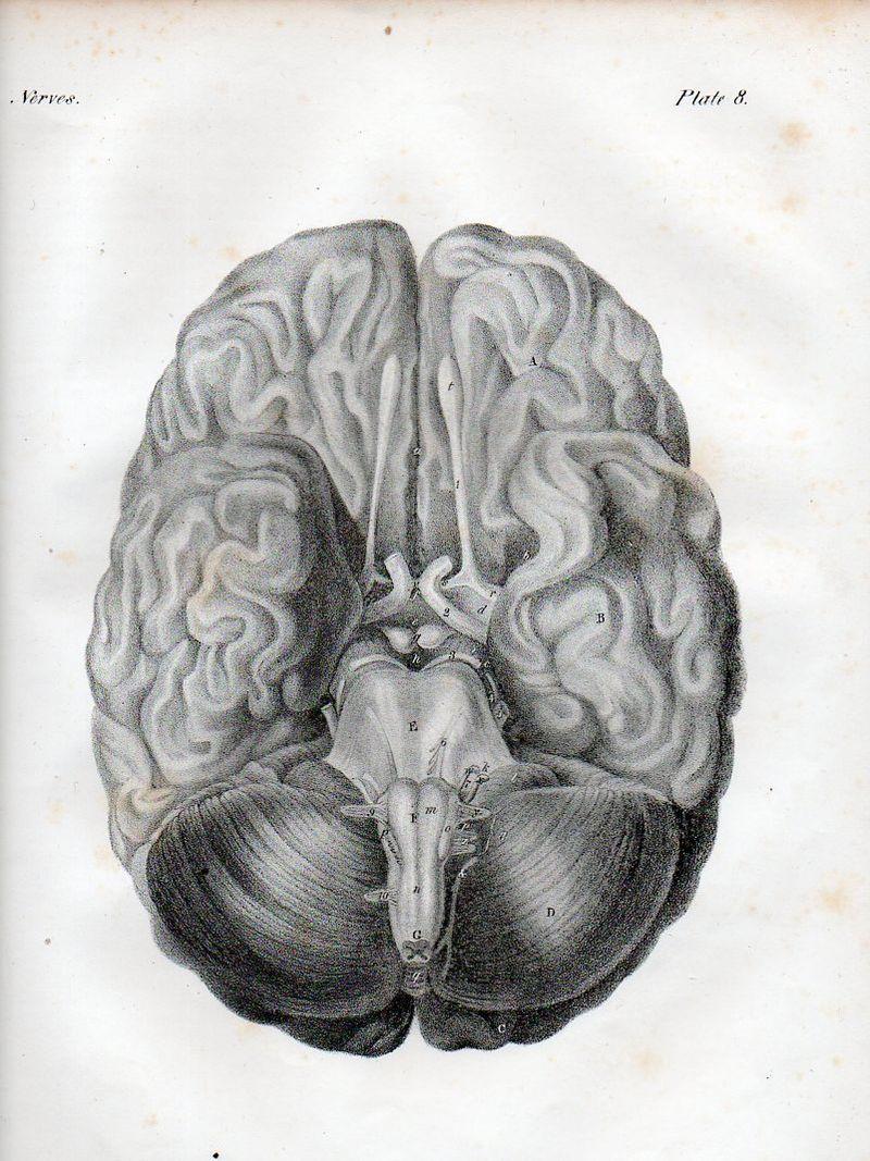 Brain527