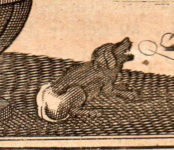 Archimedes dog 1705349