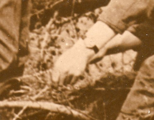 WWI photos--blowing up trees369
