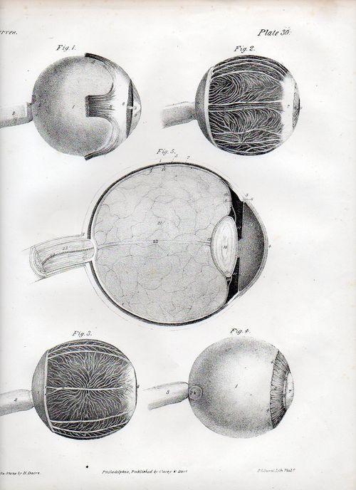 Dadaist senses eye506