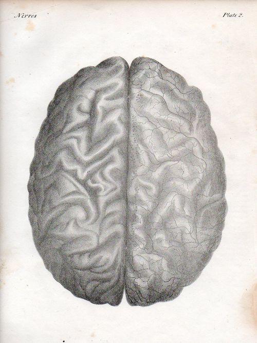 Brain521