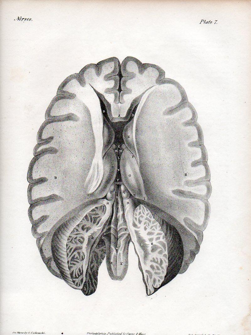 Brain526