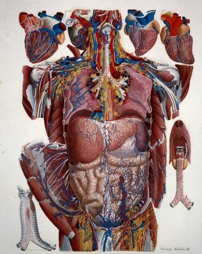 Anatomy exploded