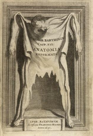 Anatomy skin bartholoiin