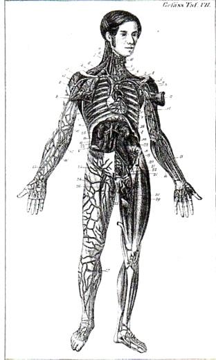 Anatomy bock482