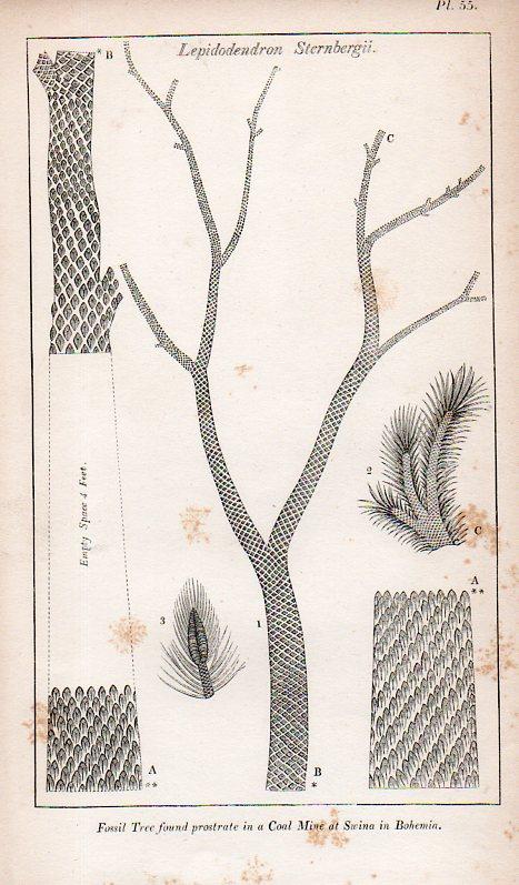 Blank trees865