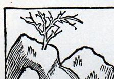 Lonely tree872