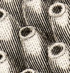 Zoomology--vermes b034