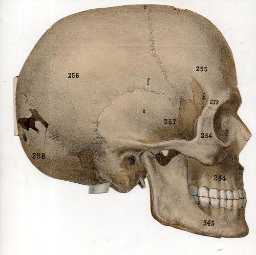 Skull492