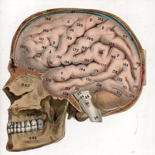 Skull495