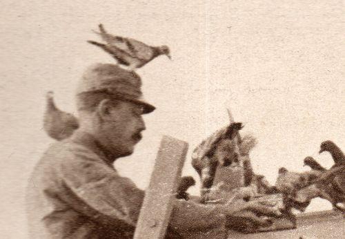 WWI  pigeon572
