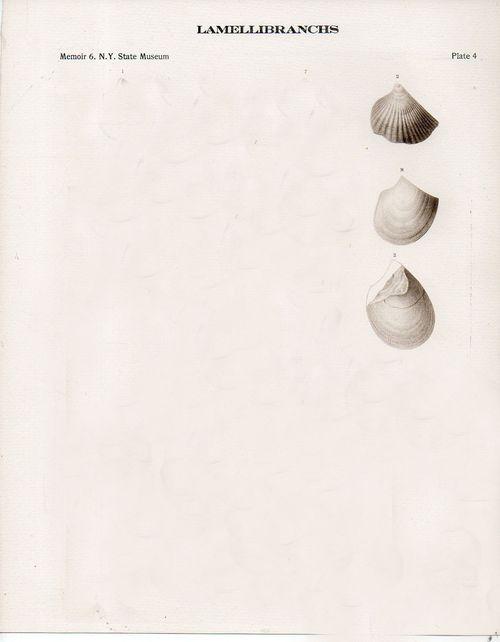 Bug shells594