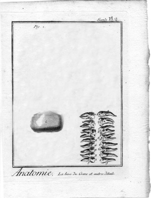 Bug teeth597