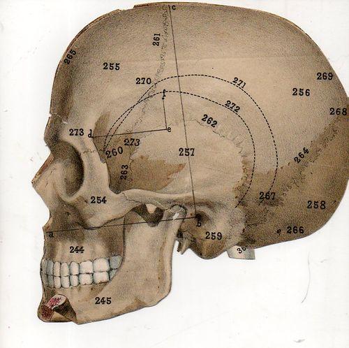 Skull497