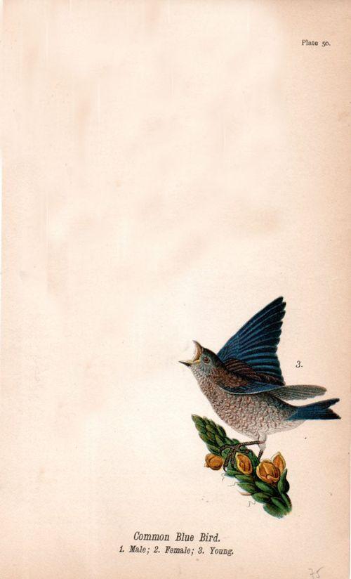 Bug bird600