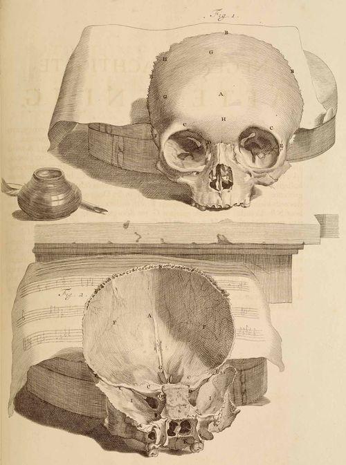 Anatomy skull