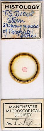 Microscope slide f