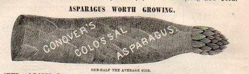 Want ads asparagus921