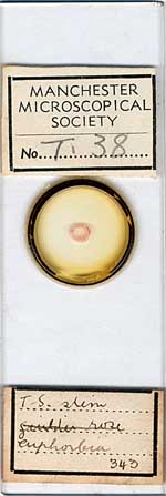Micrscope slide d