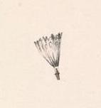 Ballooning parachute fail
