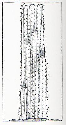 Cactus818