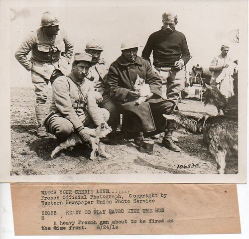 WWI Dogs181
