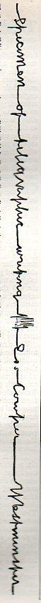 Telegraph script