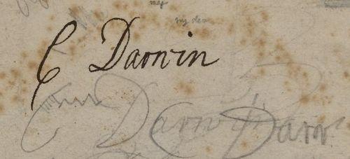 Darwin ms childhood detail